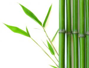 il reggiseno dimagrante Oakeysi offre una scelta di 3 diverse fibre, come fibra di bambù